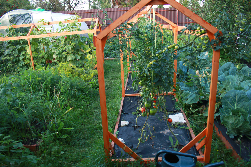 tomatenhaus selber anbauen