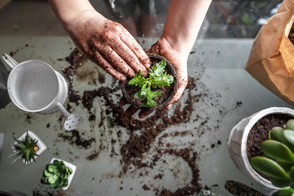 gemüseanbau wohnung